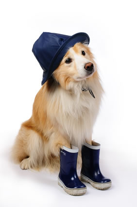 dog-in-rubber-boots
