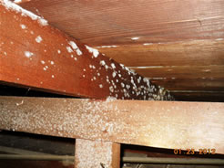 Mold in the attic of a San Diego home